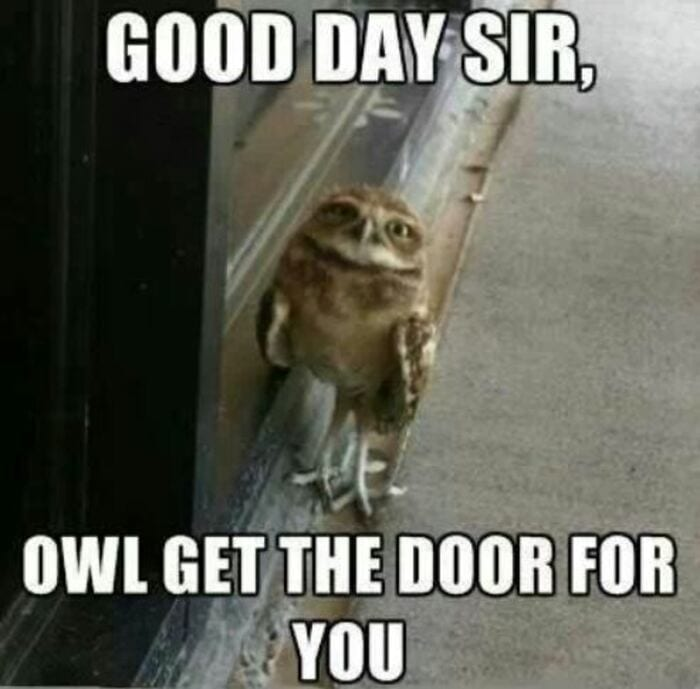 Owl Memes - Good day sir, let me hold the door for you