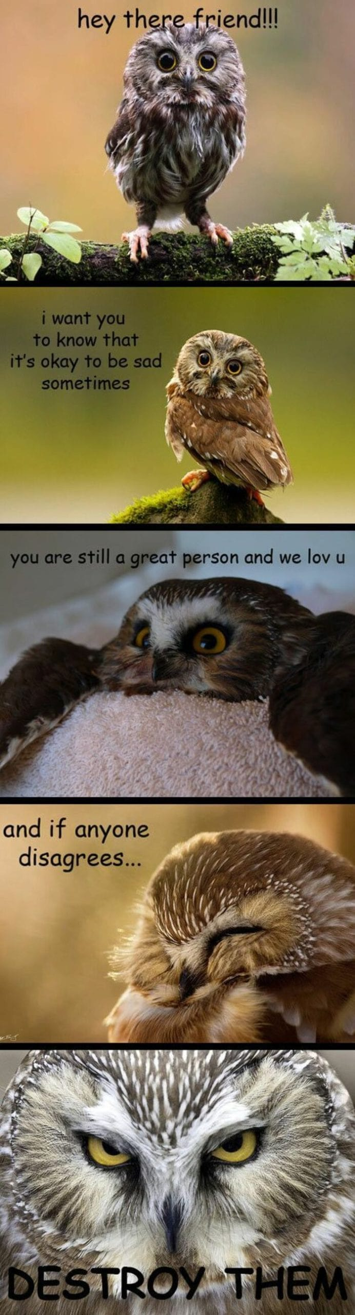 Owl Memes - Hey there friend! I want you to know that it is OK to be sad sometimes, you are still a great person and we love you and if anyone disagrees, destroy them
