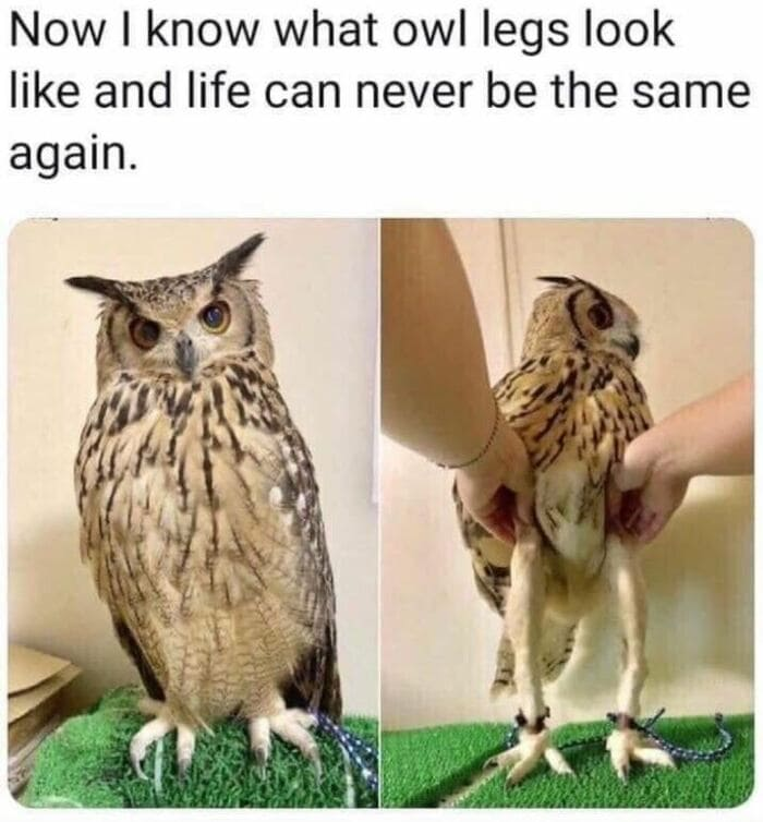 Owl Memes - Now I know what owl legs look like, life can never be the same again. Long legged owl