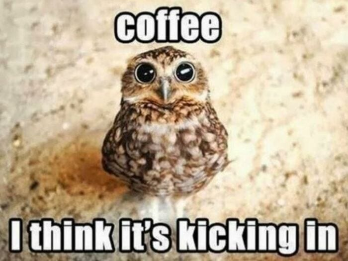 Owl Memes - Coffee, I think it's kicking in. Wide eyed owl