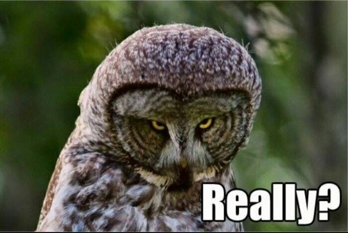 Owl Memes - Scowling owl, Really?
