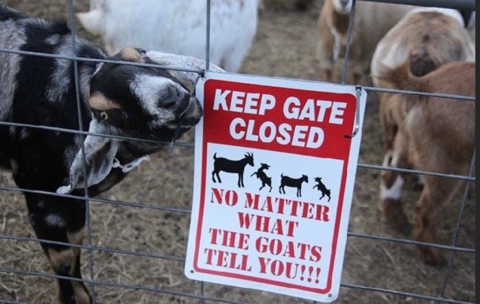 Goat Memes - keep gate closed sign