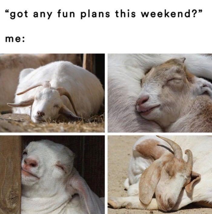 Goat Memes - fun plans goat sleeping