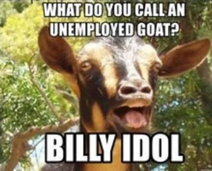 Goat Memes - enemployed goat Billy Idol