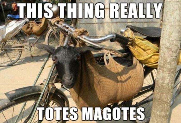 Goat Memes - totes magotes