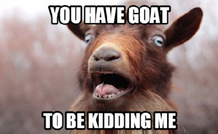 Goat Memes - you have goat to be kidding me
