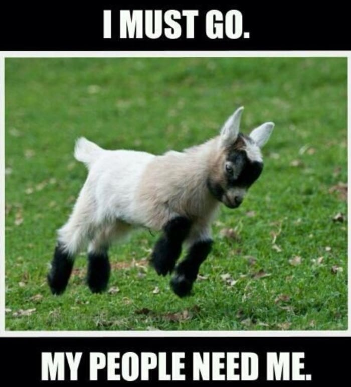 Goat Memes - goat running my people need me