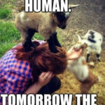 Goat Memes - today the human tomorrow the world