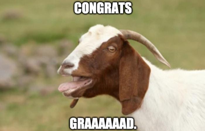 Goat Memes - congrats grad graduation goat