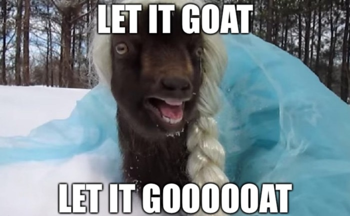 Goat Memes - frozen let it go elsa