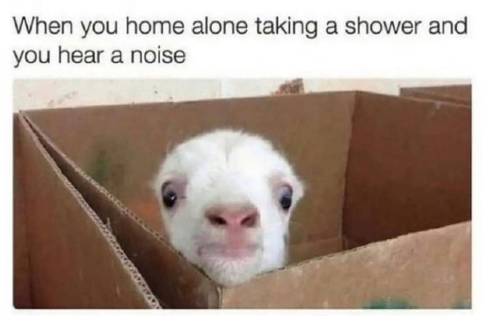 Goat Memes - home alone taking a shower