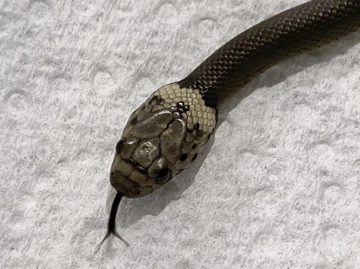 Hidden Things Unexpected - Snake Lettuce Aldi