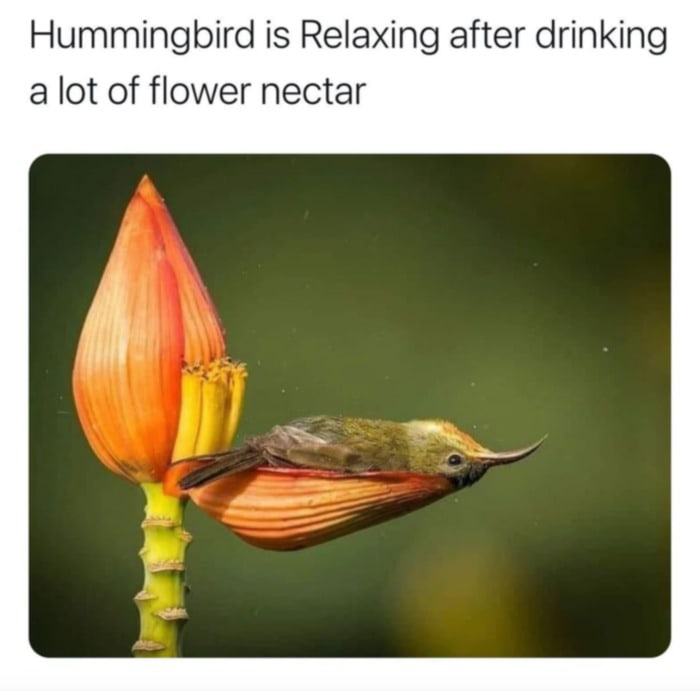 Wholesome Memes - Hummingbird after nectar