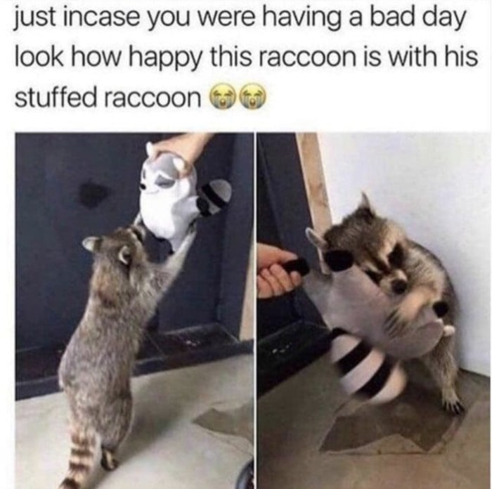 Wholesome Memes - Racoon with stuffed racoon