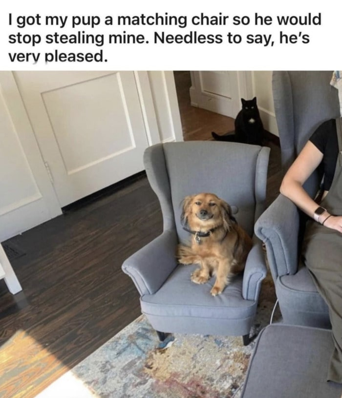 Wholesome Memes - Got my pup a matching chair