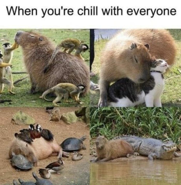 Wholesome Memes - When you're chill with everyone capybara