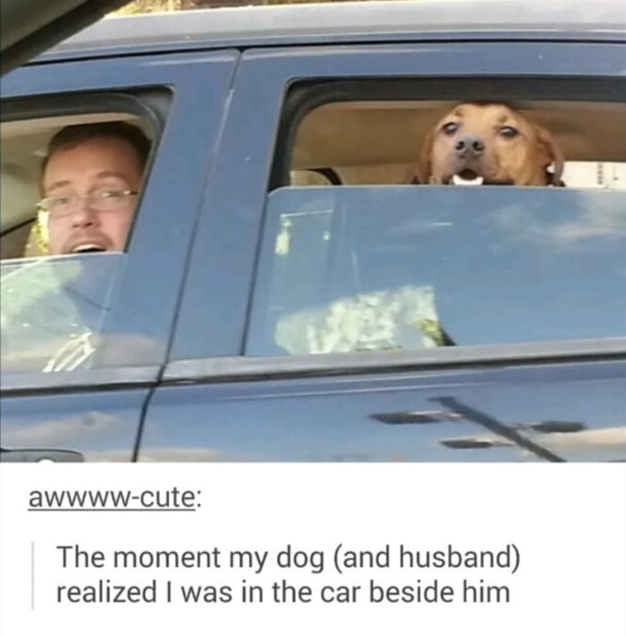 Wholesome Memes - Dog and husband see wife from car