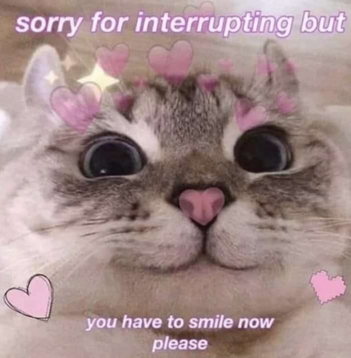Wholesome Memes - Hearts on cat smiling