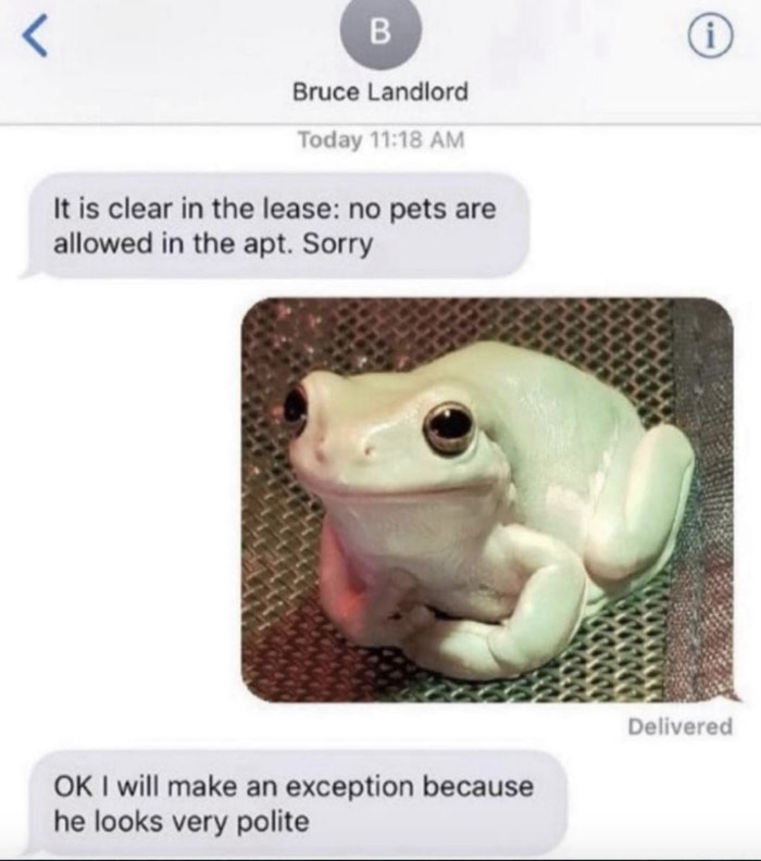 Wholesome Memes - no pets allowed text frog