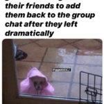 Gemini Memes - Group Chat