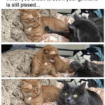 Relationship Memes - checking to see if she's still mad