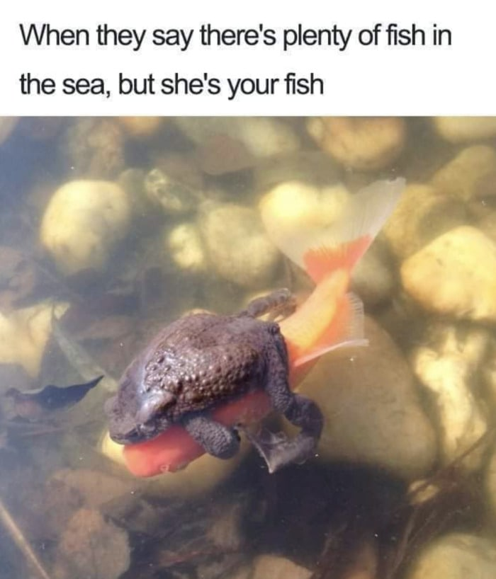Relationship Memes - plenty of fish in the sea