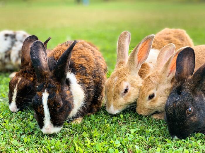 Corny Jokes - group of rabbits