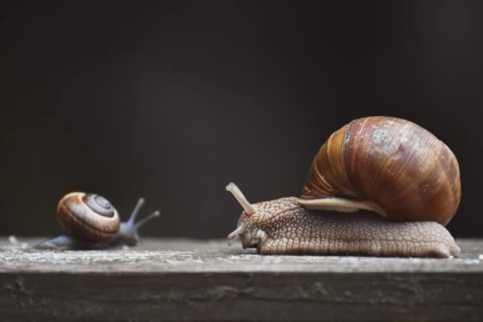 Corny Jokes - two snails