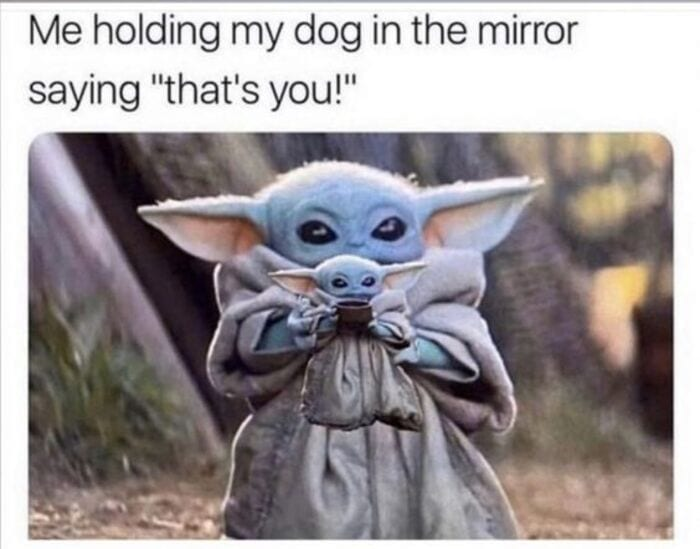 Funny Memes - Baby Yoda Sipping Soup