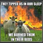 Funny Memes - Evil Cows
