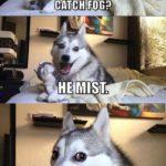 Funny Memes - Pun Dog