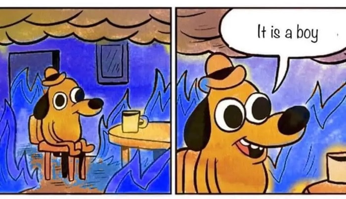 Funny Memes - This Is Fine Dog