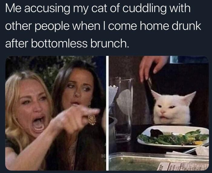 Funny Memes - Woman Yelling at Cat