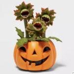 Target Halloween Hyde and Eek 2021 - Succulent