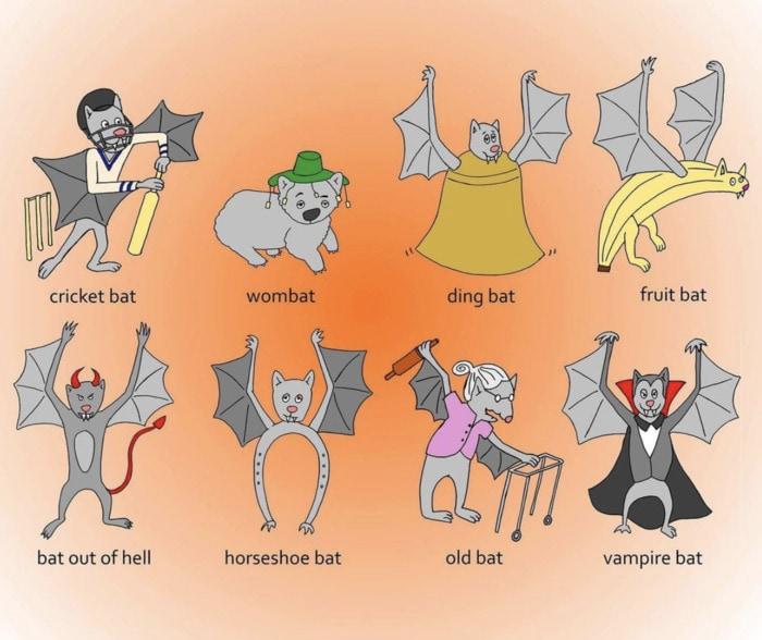 Bat Puns - Types of Bats