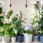Cute Plant Names