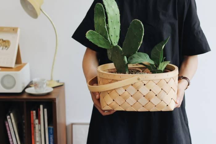 Cute Plant Names - woman cactus